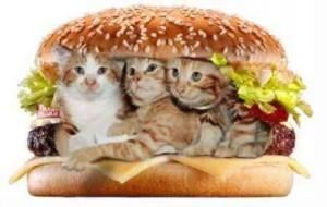 пирог с котятами